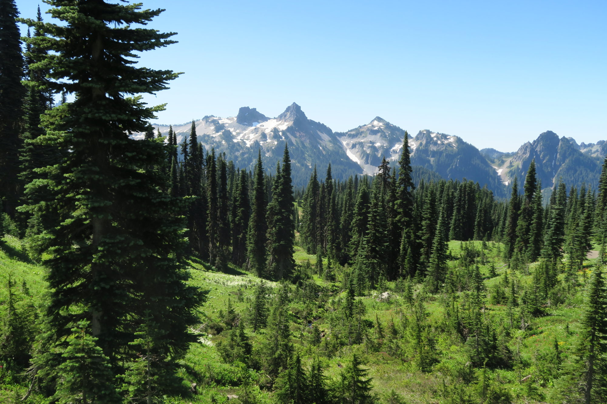 washington mt_rainier_wald